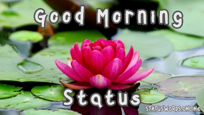 good morning status